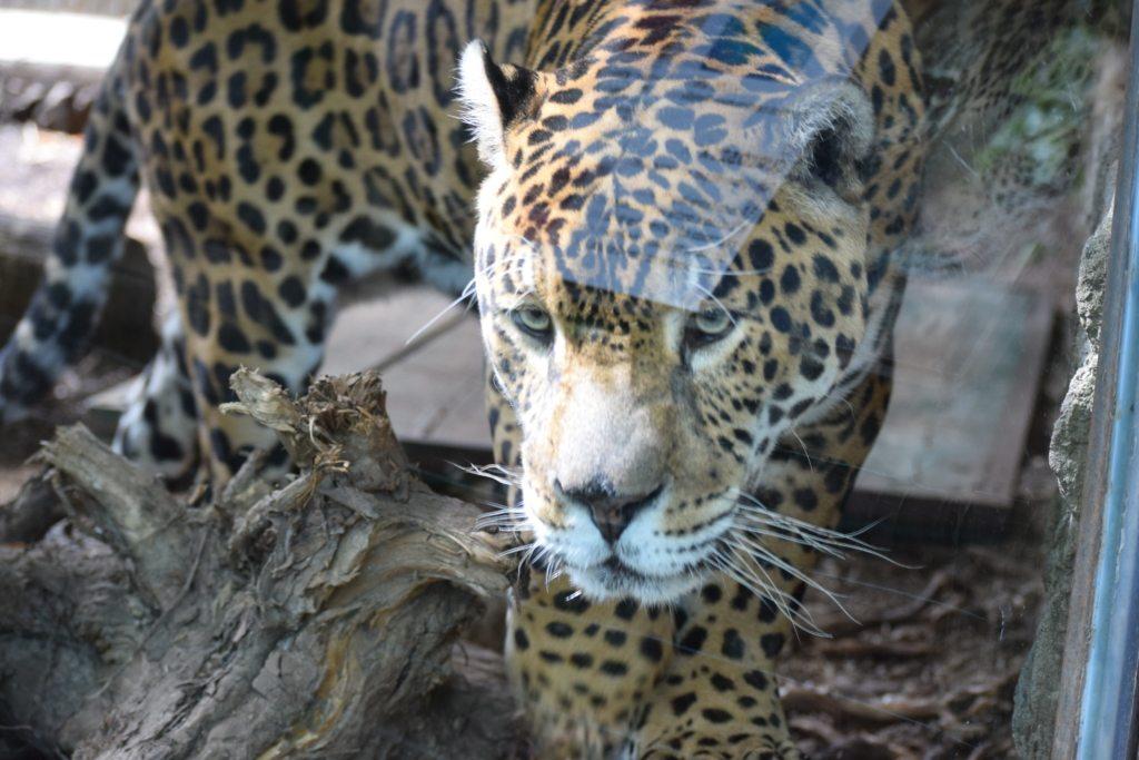 Lo zoo di Pistoia