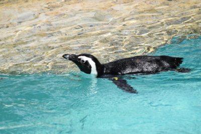 Lo zoo di Pistoia: cosa fare in una giornata con la famiglia