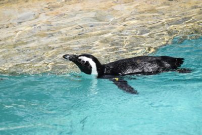 pinguino zoo pistoia