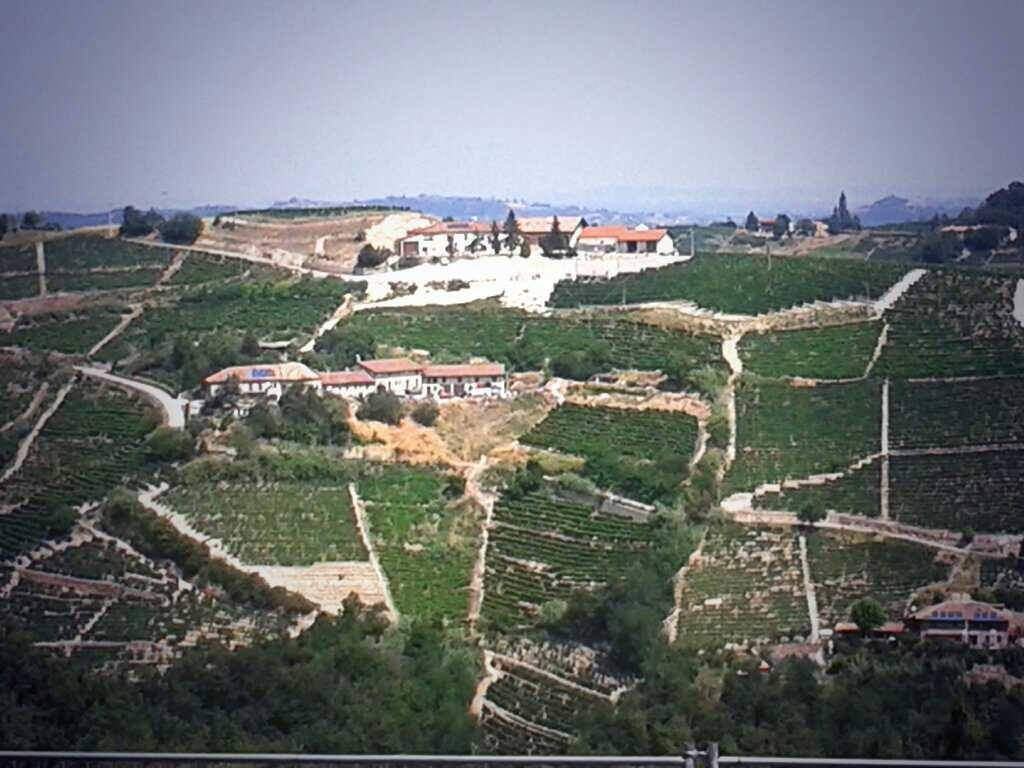 The Langhe of Fenoglio - Hills