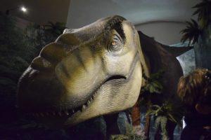 calci museo storia naturale