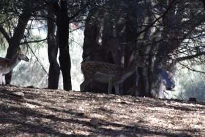 I cerbiatti liberi nel parco della Città della Domenica