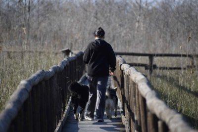 massarosa - i camminamenti in legno sul lago