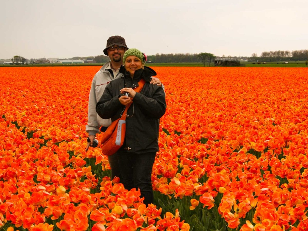 strada dei tulipani lisse