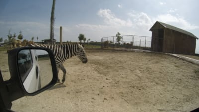 zoo safari e fiabilandia