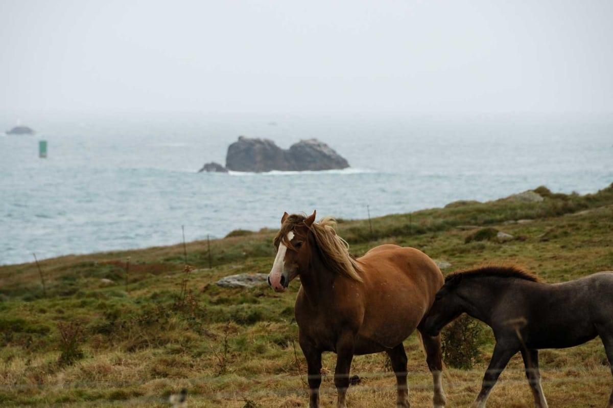 Le Conquet Cavalli sulla brughiera