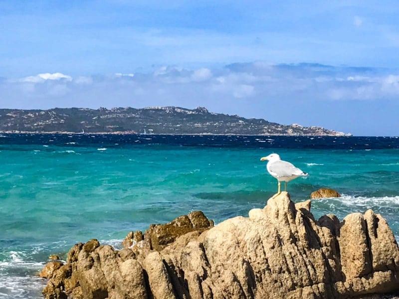 La maddalena - Spiaggia di Bassa Trinità
