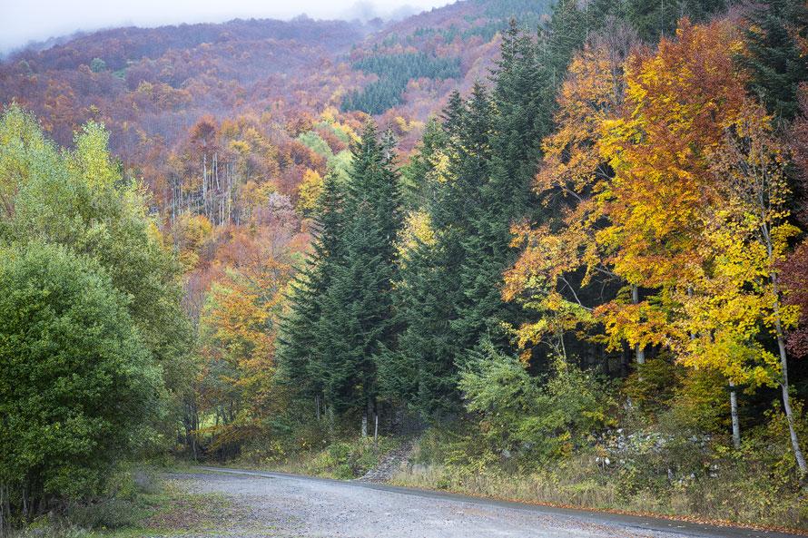 Foliage Abetone