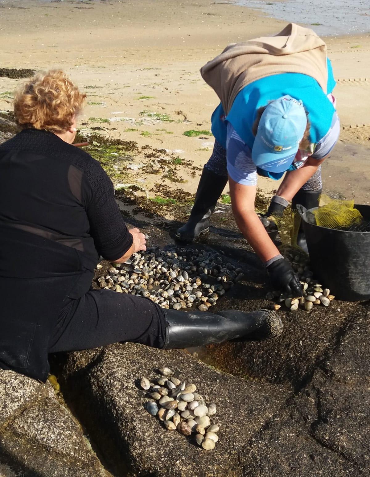 raccolta frutti di mare