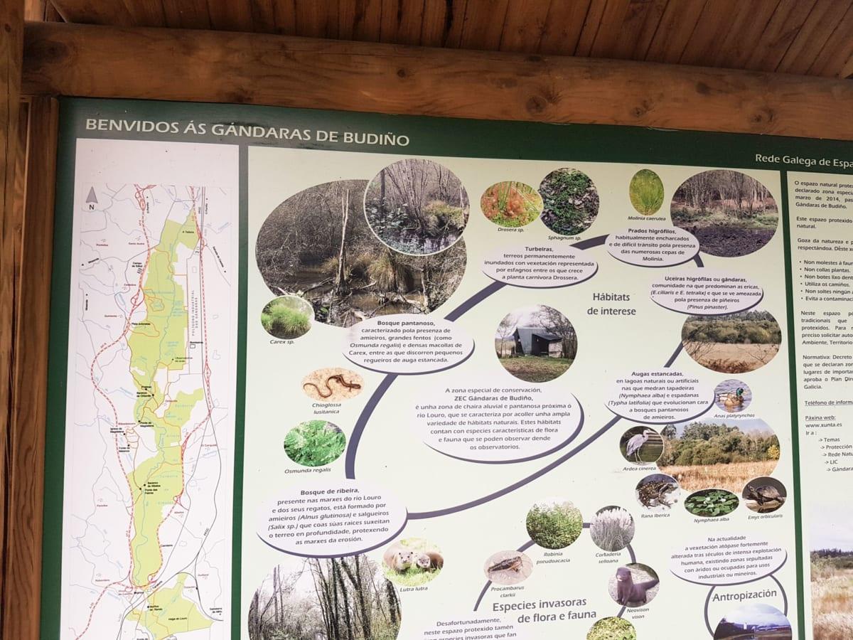 La -Gandaras de Budino. Area palustre protetta