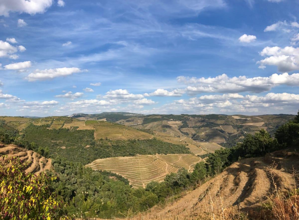 Valle del douro - Vitigni