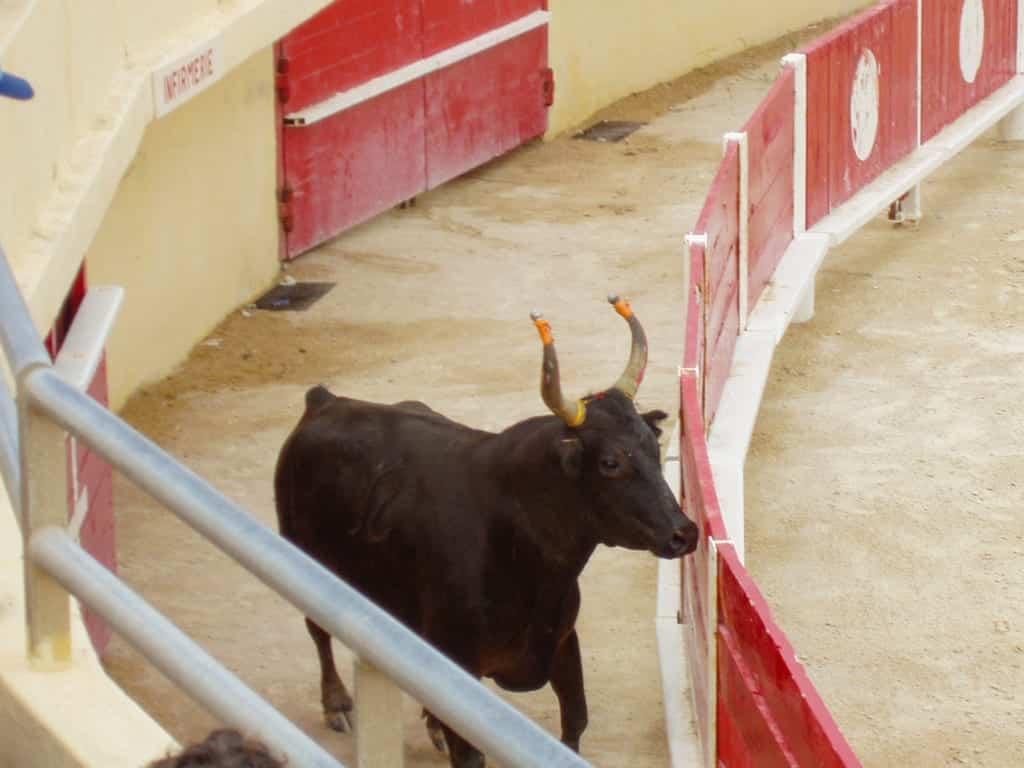 Toro arena Camargue