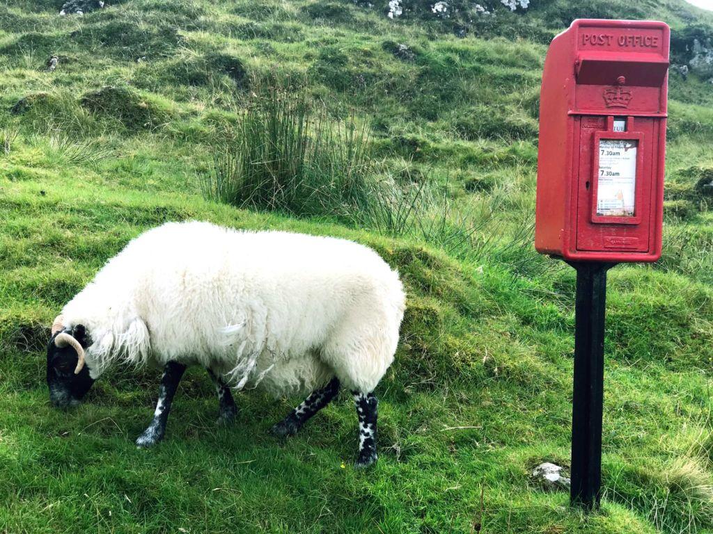 Pecore isola di Skye