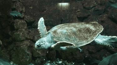 Aquarium Elba Island